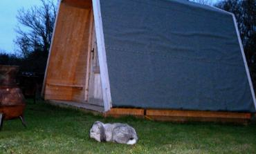 glamping pod and rabbit